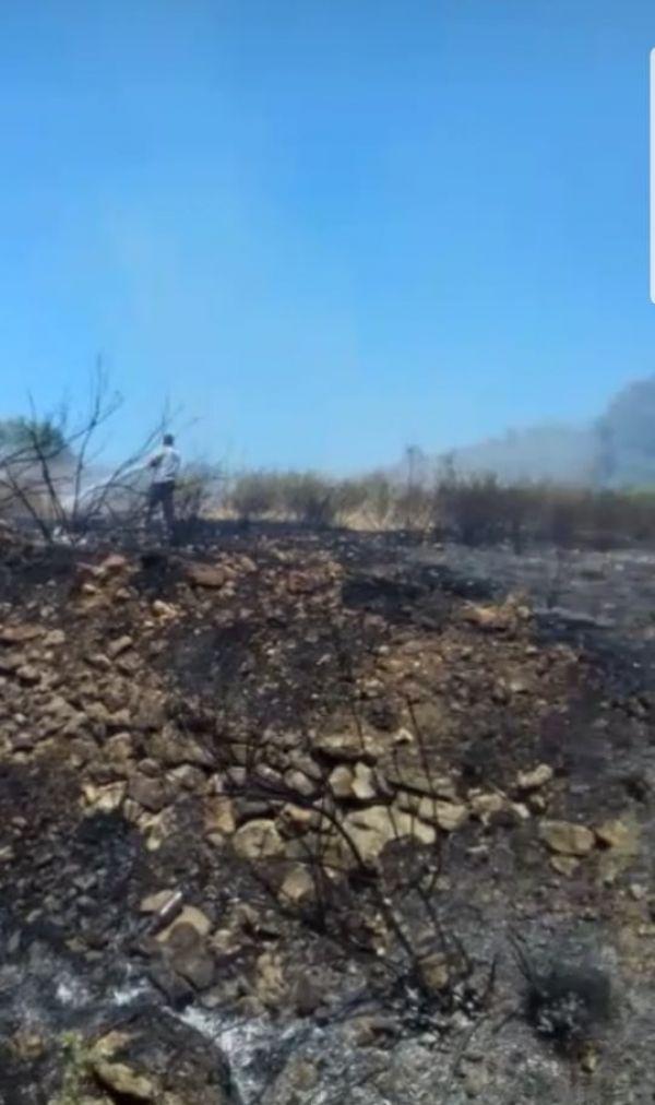 Samandağ'da zeytinlik alanda yangın
