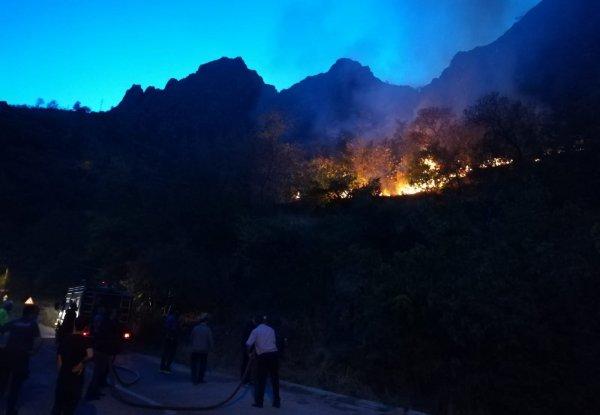 Erzincan'da meyve ağaçları kül oldu