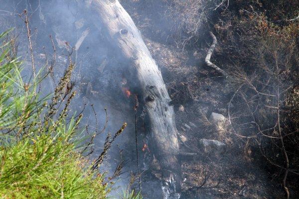 Muğla Seydikemer'de anız yangını
